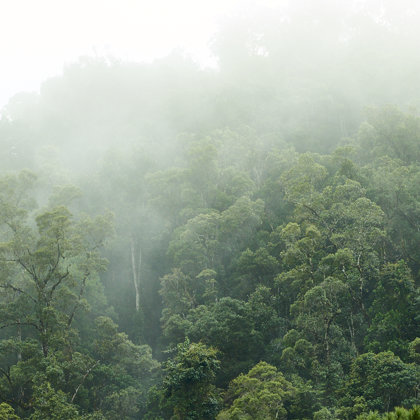 Rainforrest, prestine in all its beauti. Only small parts is open to the public